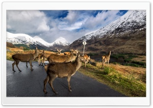 Glen Etive Stags HD Wide Wallpaper for Widescreen
