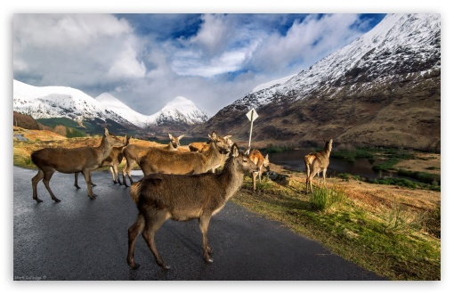 Glen Etive Stags HD wallpaper for Wide 16:10 Widescreen WHXGA WQXGA WUXGA WXGA ; HD 16:9 High Definition WQHD QWXGA 1080p 900p 720p QHD nHD ; UHD 16:9 WQHD QWXGA 1080p 900p 720p QHD nHD ; Standard 4:3 3:2 Fullscreen UXGA XGA SVGA DVGA HVGA HQVGA devices ( Apple PowerBook G4 iPhone 4 3G 3GS iPod Touch ) ; iPad 1/2/Mini ; Mobile 4:3 3:2 16:9 - UXGA XGA SVGA DVGA HVGA HQVGA devices ( Apple PowerBook G4 iPhone 4 3G 3GS iPod Touch ) WQHD QWXGA 1080p 900p 720p QHD nHD ;