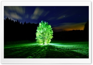 Glowing Tree HD Wide Wallpaper for Widescreen