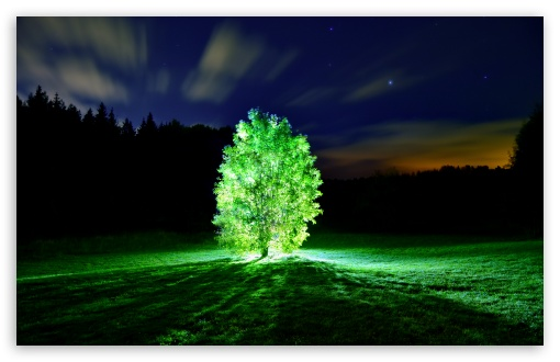 Glowing Tree HD wallpaper for Wide 16:10 5:3 Widescreen WHXGA WQXGA WUXGA WXGA WGA ; HD 16:9 High Definition WQHD QWXGA 1080p 900p 720p QHD nHD ; UHD 16:9 WQHD QWXGA 1080p 900p 720p QHD nHD ; Standard 4:3 5:4 3:2 Fullscreen UXGA XGA SVGA QSXGA SXGA DVGA HVGA HQVGA devices ( Apple PowerBook G4 iPhone 4 3G 3GS iPod Touch ) ; Tablet 1:1 ; iPad 1/2/Mini ; Mobile 4:3 5:3 3:2 16:9 5:4 - UXGA XGA SVGA WGA DVGA HVGA HQVGA devices ( Apple PowerBook G4 iPhone 4 3G 3GS iPod Touch ) WQHD QWXGA 1080p 900p 720p QHD nHD QSXGA SXGA ; Dual 16:10 4:3 5:4 WHXGA WQXGA WUXGA WXGA UXGA XGA SVGA QSXGA SXGA ;