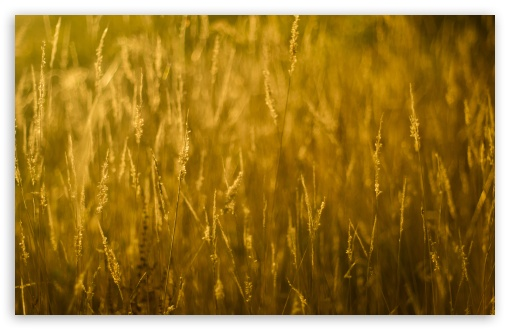 Gold Grass ❤ 4K UHD Wallpaper for Wide 16:10 5:3 Widescreen WHXGA WQXGA WUXGA WXGA WGA ; 4K UHD 16:9 Ultra High Definition 2160p 1440p 1080p 900p 720p ; UHD 16:9 2160p 1440p 1080p 900p 720p ; Standard 4:3 5:4 3:2 Fullscreen UXGA XGA SVGA QSXGA SXGA DVGA HVGA HQVGA ( Apple PowerBook G4 iPhone 4 3G 3GS iPod Touch ) ; Smartphone 5:3 WGA ; Tablet 1:1 ; iPad 1/2/Mini ; Mobile 4:3 5:3 3:2 16:9 5:4 - UXGA XGA SVGA WGA DVGA HVGA HQVGA ( Apple PowerBook G4 iPhone 4 3G 3GS iPod Touch ) 2160p 1440p 1080p 900p 720p QSXGA SXGA ; Dual 16:10 5:3 16:9 4:3 5:4 WHXGA WQXGA WUXGA WXGA WGA 2160p 1440p 1080p 900p 720p UXGA XGA SVGA QSXGA SXGA ;