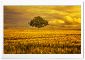 Gold Landscape HD Wide Wallpaper for Widescreen