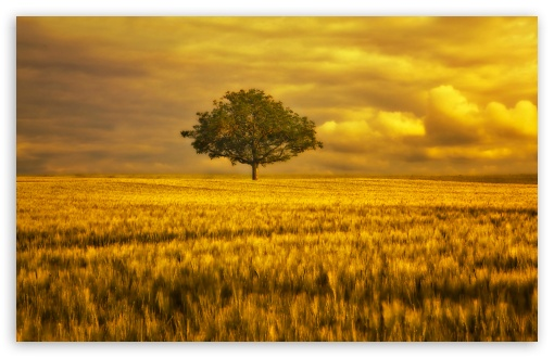 Gold Landscape ❤ 4K UHD Wallpaper for Wide 16:10 5:3 Widescreen WHXGA WQXGA WUXGA WXGA WGA ; 4K UHD 16:9 Ultra High Definition 2160p 1440p 1080p 900p 720p ; UHD 16:9 2160p 1440p 1080p 900p 720p ; Standard 4:3 5:4 3:2 Fullscreen UXGA XGA SVGA QSXGA SXGA DVGA HVGA HQVGA ( Apple PowerBook G4 iPhone 4 3G 3GS iPod Touch ) ; Tablet 1:1 ; iPad 1/2/Mini ; Mobile 4:3 5:3 3:2 16:9 5:4 - UXGA XGA SVGA WGA DVGA HVGA HQVGA ( Apple PowerBook G4 iPhone 4 3G 3GS iPod Touch ) 2160p 1440p 1080p 900p 720p QSXGA SXGA ; Dual 16:10 5:3 16:9 4:3 5:4 WHXGA WQXGA WUXGA WXGA WGA 2160p 1440p 1080p 900p 720p UXGA XGA SVGA QSXGA SXGA ;