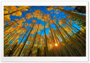 Golden Aspen HD Wide Wallpaper for Widescreen