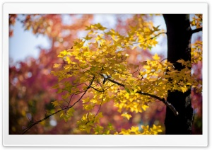 Golden Autumn Leaves HD Wide Wallpaper for Widescreen