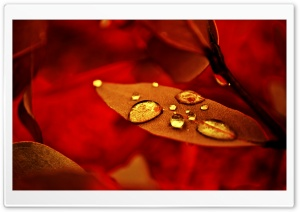 Golden Drops HD Wide Wallpaper for Widescreen