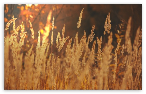Golden Field ❤ 4K UHD Wallpaper for Wide 16:10 5:3 Widescreen WHXGA WQXGA WUXGA WXGA WGA ; 4K UHD 16:9 Ultra High Definition 2160p 1440p 1080p 900p 720p ; Standard 4:3 5:4 3:2 Fullscreen UXGA XGA SVGA QSXGA SXGA DVGA HVGA HQVGA ( Apple PowerBook G4 iPhone 4 3G 3GS iPod Touch ) ; Tablet 1:1 ; iPad 1/2/Mini ; Mobile 4:3 5:3 3:2 16:9 5:4 - UXGA XGA SVGA WGA DVGA HVGA HQVGA ( Apple PowerBook G4 iPhone 4 3G 3GS iPod Touch ) 2160p 1440p 1080p 900p 720p QSXGA SXGA ;