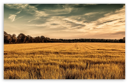 Golden Field ❤ 4K UHD Wallpaper for Wide 16:10 5:3 Widescreen WHXGA WQXGA WUXGA WXGA WGA ; 4K UHD 16:9 Ultra High Definition 2160p 1440p 1080p 900p 720p ; Standard 4:3 5:4 3:2 Fullscreen UXGA XGA SVGA QSXGA SXGA DVGA HVGA HQVGA ( Apple PowerBook G4 iPhone 4 3G 3GS iPod Touch ) ; Smartphone 5:3 WGA ; Tablet 1:1 ; iPad 1/2/Mini ; Mobile 4:3 5:3 3:2 16:9 5:4 - UXGA XGA SVGA WGA DVGA HVGA HQVGA ( Apple PowerBook G4 iPhone 4 3G 3GS iPod Touch ) 2160p 1440p 1080p 900p 720p QSXGA SXGA ;