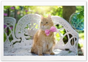 Golden Fluffy Cat HD Wide Wallpaper for Widescreen