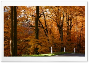 Golden Forest HD Wide Wallpaper for Widescreen