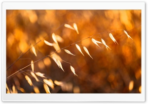 Golden Hour Ultra HD Wallpaper for 4K UHD Widescreen desktop, tablet & smartphone