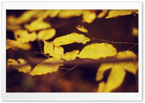 Golden Leaves HD Wide Wallpaper for Widescreen