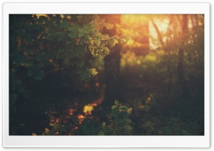 Golden Light HD Wide Wallpaper for Widescreen