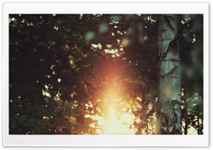 Golden Light Bokeh HD Wide Wallpaper for Widescreen