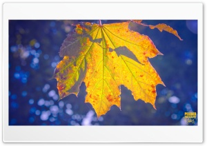 Golden Maple HD Wide Wallpaper for Widescreen