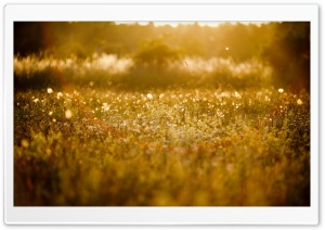 Golden Meadow HD Wide Wallpaper for Widescreen