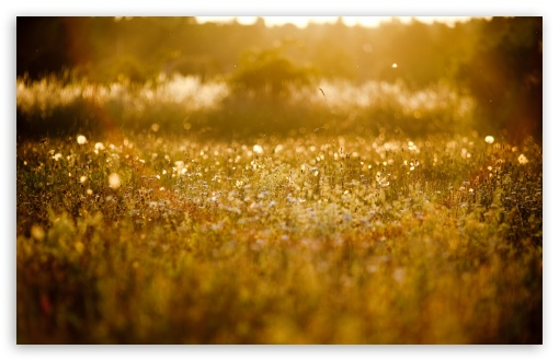 Golden Meadow HD wallpaper for Wide 16:10 5:3 Widescreen WHXGA WQXGA WUXGA WXGA WGA ; HD 16:9 High Definition WQHD QWXGA 1080p 900p 720p QHD nHD ; Standard 4:3 5:4 3:2 Fullscreen UXGA XGA SVGA QSXGA SXGA DVGA HVGA HQVGA devices ( Apple PowerBook G4 iPhone 4 3G 3GS iPod Touch ) ; Tablet 1:1 ; iPad 1/2/Mini ; Mobile 4:3 5:3 3:2 16:9 5:4 - UXGA XGA SVGA WGA DVGA HVGA HQVGA devices ( Apple PowerBook G4 iPhone 4 3G 3GS iPod Touch ) WQHD QWXGA 1080p 900p 720p QHD nHD QSXGA SXGA ; Dual 4:3 5:4 16:10 5:3 16:9 UXGA XGA SVGA QSXGA SXGA WHXGA WQXGA WUXGA WXGA WGA WQHD QWXGA 1080p 900p 720p QHD nHD ;
