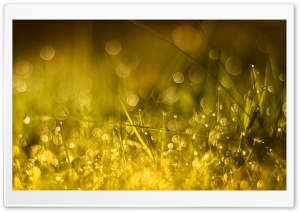 Golden Morning Bokeh HD Wide Wallpaper for Widescreen