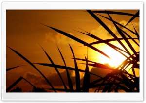 Golden Sky HD Wide Wallpaper for Widescreen