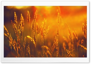 Golden Sunlight HD Wide Wallpaper for Widescreen