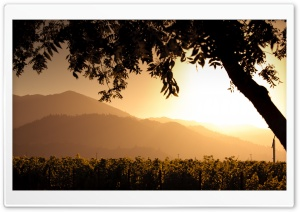 Golden Sunset Over Vineyard HD Wide Wallpaper for Widescreen