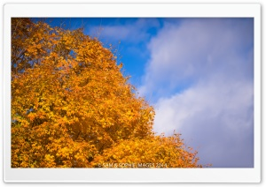 Golden Tree, Blue Sky HD Wide Wallpaper for Widescreen
