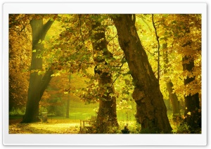 Golden Trees HD Wide Wallpaper for Widescreen