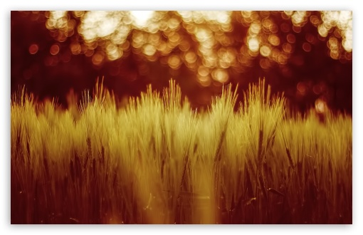 Golden Wheat Field UltraHD Wallpaper for Wide 16:10 5:3 Widescreen WHXGA WQXGA WUXGA WXGA WGA ; 8K UHD TV 16:9 Ultra High Definition 2160p 1440p 1080p 900p 720p ; Standard 4:3 5:4 3:2 Fullscreen UXGA XGA SVGA QSXGA SXGA DVGA HVGA HQVGA ( Apple PowerBook G4 iPhone 4 3G 3GS iPod Touch ) ; Tablet 1:1 ; iPad 1/2/Mini ; Mobile 4:3 5:3 3:2 16:9 5:4 - UXGA XGA SVGA WGA DVGA HVGA HQVGA ( Apple PowerBook G4 iPhone 4 3G 3GS iPod Touch ) 2160p 1440p 1080p 900p 720p QSXGA SXGA ;