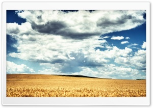 Golden Wheat Field HDR HD Wide Wallpaper for Widescreen