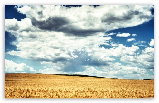 Golden Wheat Field HDR ❤ 4K UHD Wallpaper for Wide 16:10 5:3 Widescreen WHXGA WQXGA WUXGA WXGA WGA ; 4K UHD 16:9 Ultra High Definition 2160p 1440p 1080p 900p 720p ; Standard 4:3 5:4 3:2 Fullscreen UXGA XGA SVGA QSXGA SXGA DVGA HVGA HQVGA ( Apple PowerBook G4 iPhone 4 3G 3GS iPod Touch ) ; Tablet 1:1 ; iPad 1/2/Mini ; Mobile 4:3 5:3 3:2 16:9 5:4 - UXGA XGA SVGA WGA DVGA HVGA HQVGA ( Apple PowerBook G4 iPhone 4 3G 3GS iPod Touch ) 2160p 1440p 1080p 900p 720p QSXGA SXGA ; Dual 16:10 5:3 4:3 5:4 WHXGA WQXGA WUXGA WXGA WGA UXGA XGA SVGA QSXGA SXGA ;