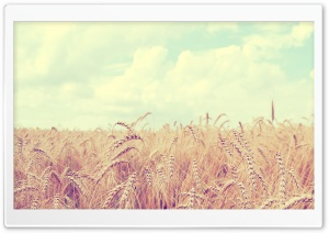 Golden Wheat Harvest HD Wide Wallpaper for Widescreen