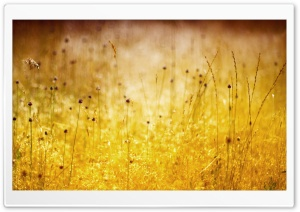 Golden WildFlowers HD Wide Wallpaper for Widescreen