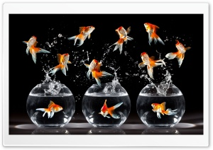 Goldfish HD Wide Wallpaper for Widescreen