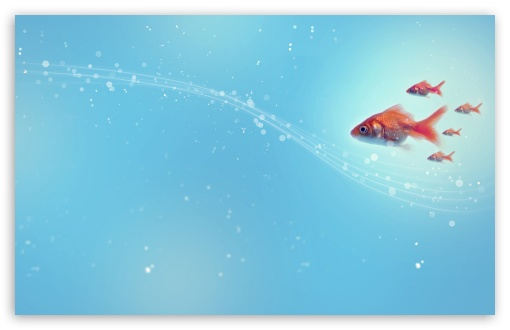 Goldfish ❤ 4K UHD Wallpaper for Wide 16:10 5:3 Widescreen WHXGA WQXGA WUXGA WXGA WGA ; 4K UHD 16:9 Ultra High Definition 2160p 1440p 1080p 900p 720p ; Standard 4:3 5:4 3:2 Fullscreen UXGA XGA SVGA QSXGA SXGA DVGA HVGA HQVGA ( Apple PowerBook G4 iPhone 4 3G 3GS iPod Touch ) ; Tablet 1:1 ; iPad 1/2/Mini ; Mobile 4:3 5:3 3:2 16:9 5:4 - UXGA XGA SVGA WGA DVGA HVGA HQVGA ( Apple PowerBook G4 iPhone 4 3G 3GS iPod Touch ) 2160p 1440p 1080p 900p 720p QSXGA SXGA ; Dual 16:10 5:3 16:9 4:3 5:4 WHXGA WQXGA WUXGA WXGA WGA 2160p 1440p 1080p 900p 720p UXGA XGA SVGA QSXGA SXGA ;