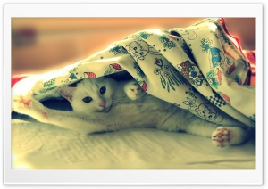 Good Morning Cat HD Wide Wallpaper for Widescreen