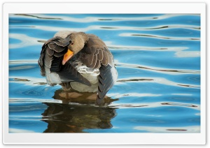 Goose HD Wide Wallpaper for Widescreen