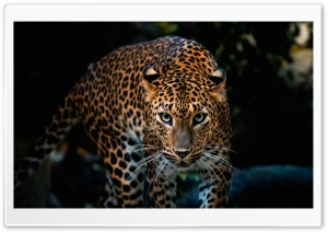 Gorgeous Jaguar HD Wide Wallpaper for 4K UHD Widescreen desktop & smartphone