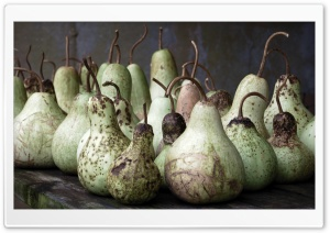 Gourds HD Wide Wallpaper for Widescreen