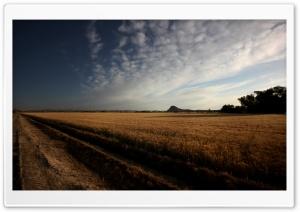 Grain Field HD Wide Wallpaper for Widescreen