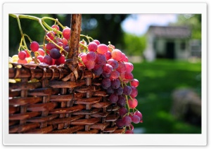 Grape Basket HD Wide Wallpaper for Widescreen