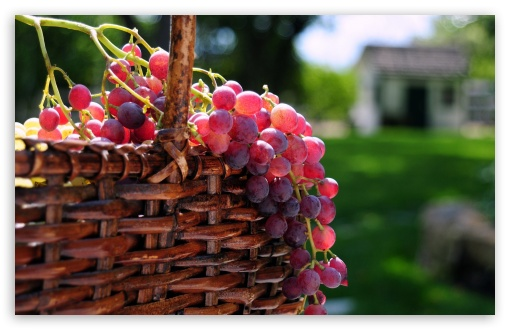 Grape Basket HD wallpaper for Wide 16:10 5:3 Widescreen WHXGA WQXGA WUXGA WXGA WGA ; HD 16:9 High Definition WQHD QWXGA 1080p 900p 720p QHD nHD ; Standard 4:3 5:4 3:2 Fullscreen UXGA XGA SVGA QSXGA SXGA DVGA HVGA HQVGA devices ( Apple PowerBook G4 iPhone 4 3G 3GS iPod Touch ) ; Tablet 1:1 ; iPad 1/2/Mini ; Mobile 4:3 5:3 3:2 16:9 5:4 - UXGA XGA SVGA WGA DVGA HVGA HQVGA devices ( Apple PowerBook G4 iPhone 4 3G 3GS iPod Touch ) WQHD QWXGA 1080p 900p 720p QHD nHD QSXGA SXGA ;