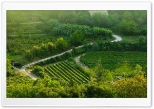 Grape Fields, Provence HD Wide Wallpaper for Widescreen