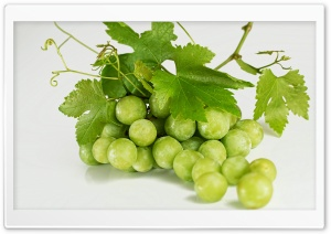 Grape Vine HD Wide Wallpaper for Widescreen