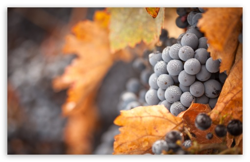 Grapes 4K HD Desktop Wallpaper for 4K Ultra HD TV • Dual ...