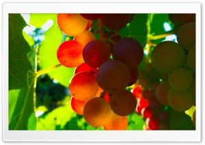 Grapes Ultra HD Wallpaper for 4K UHD Widescreen desktop, tablet & smartphone