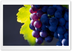 Grapes HD Wide Wallpaper for Widescreen