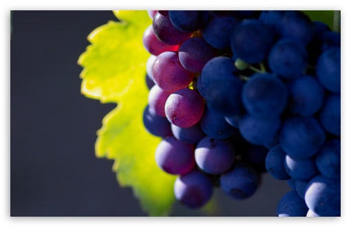 Grapes HD wallpaper for Wide 16:10 5:3 Widescreen WHXGA WQXGA WUXGA WXGA WGA ; HD 16:9 High Definition WQHD QWXGA 1080p 900p 720p QHD nHD ; UHD 16:9 WQHD QWXGA 1080p 900p 720p QHD nHD ; Standard 4:3 5:4 3:2 Fullscreen UXGA XGA SVGA QSXGA SXGA DVGA HVGA HQVGA devices ( Apple PowerBook G4 iPhone 4 3G 3GS iPod Touch ) ; Tablet 1:1 ; iPad 1/2/Mini ; Mobile 4:3 5:3 3:2 16:9 5:4 - UXGA XGA SVGA WGA DVGA HVGA HQVGA devices ( Apple PowerBook G4 iPhone 4 3G 3GS iPod Touch ) WQHD QWXGA 1080p 900p 720p QHD nHD QSXGA SXGA ; Dual 16:10 5:3 4:3 5:4 WHXGA WQXGA WUXGA WXGA WGA UXGA XGA SVGA QSXGA SXGA ;