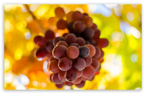 Grapes HD wallpaper for Wide 16:10 5:3 Widescreen WHXGA WQXGA WUXGA WXGA WGA ; HD 16:9 High Definition WQHD QWXGA 1080p 900p 720p QHD nHD ; UHD 16:9 WQHD QWXGA 1080p 900p 720p QHD nHD ; Standard 4:3 5:4 3:2 Fullscreen UXGA XGA SVGA QSXGA SXGA DVGA HVGA HQVGA devices ( Apple PowerBook G4 iPhone 4 3G 3GS iPod Touch ) ; Tablet 1:1 ; iPad 1/2/Mini ; Mobile 4:3 5:3 3:2 16:9 5:4 - UXGA XGA SVGA WGA DVGA HVGA HQVGA devices ( Apple PowerBook G4 iPhone 4 3G 3GS iPod Touch ) WQHD QWXGA 1080p 900p 720p QHD nHD QSXGA SXGA ; Dual 16:10 5:3 16:9 4:3 5:4 WHXGA WQXGA WUXGA WXGA WGA WQHD QWXGA 1080p 900p 720p QHD nHD UXGA XGA SVGA QSXGA SXGA ;