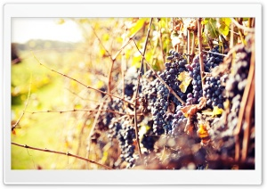 Grapes Autumn HD Wide Wallpaper for Widescreen