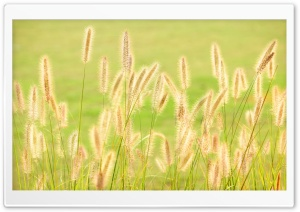 Grass HD Wide Wallpaper for 4K UHD Widescreen desktop & smartphone